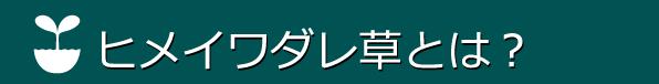ヒメイワダレソウ,山梨,ヒメイワダレ草,ヒメイワダレ草専用シート